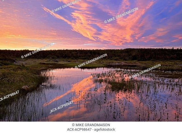 Morning light reflected in wetland Belburns Newfoundland & Labrador Canada