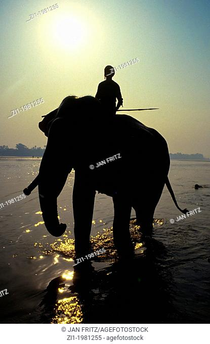 silhouette of mahut riding an elephant at the Mahanadi river at Sonpur in India