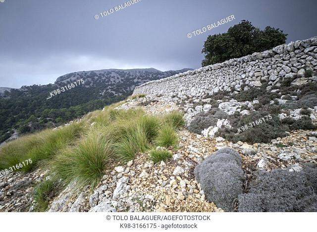 Coll de Pastorix y Puig des Teix, Bunyola, Paraje natural de la Serra de Tramuntana, Mallorca, balearic islands, Spain