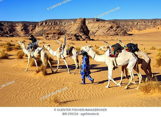 Tuareg nomads with white Mehari riding dromedaries, Acacus Mountains, Libya