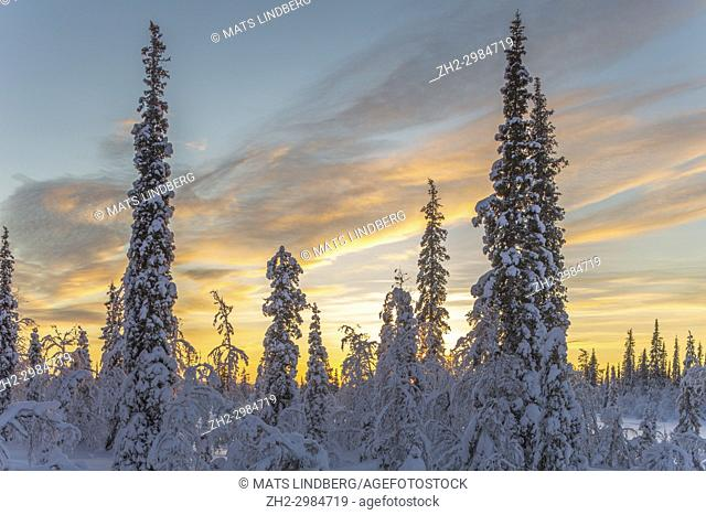 Winter landscape at sunset with nice warm color in the sky and cold blue color on the snow, Gällivare, Swedish Lapland, Sweden