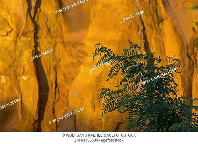 A tree silhouetted in front of the Ochre rocks at the village of Roussillon in the Luberon, Provence-Alpes-Cote d Azur region in southeastern France