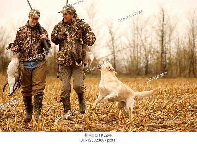 Hunters In Field With Yellow Labs