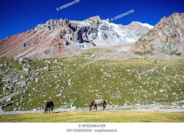 Two pasturing horses at sunny day in high snowy mountains, Tien Shan, Kyrgyzstan