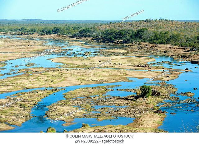 A pod of Hippopotami (Hippopotamus amphibius) resting on sandbank by river, Kruger National Park, Transvaal, South Africa