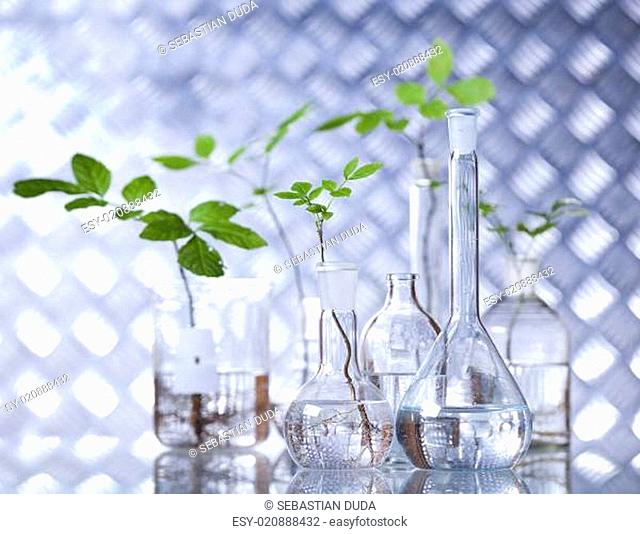 Laboratory glassware, genetically modified plant