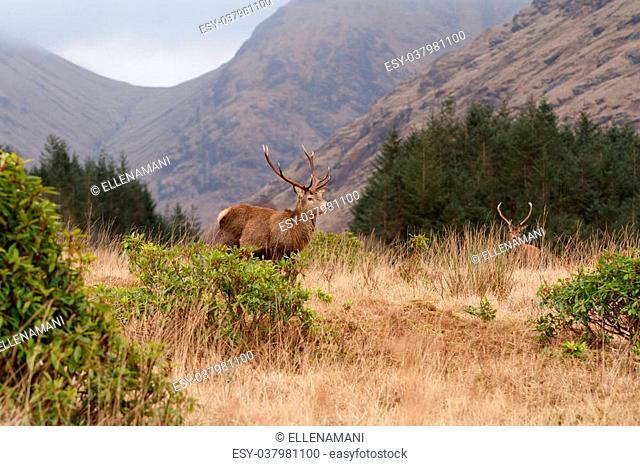 a view of Glen Etive Scotland