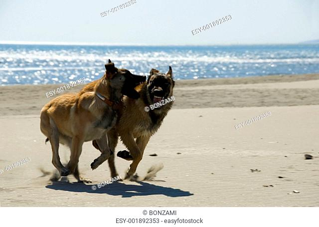 two puppies on the beach