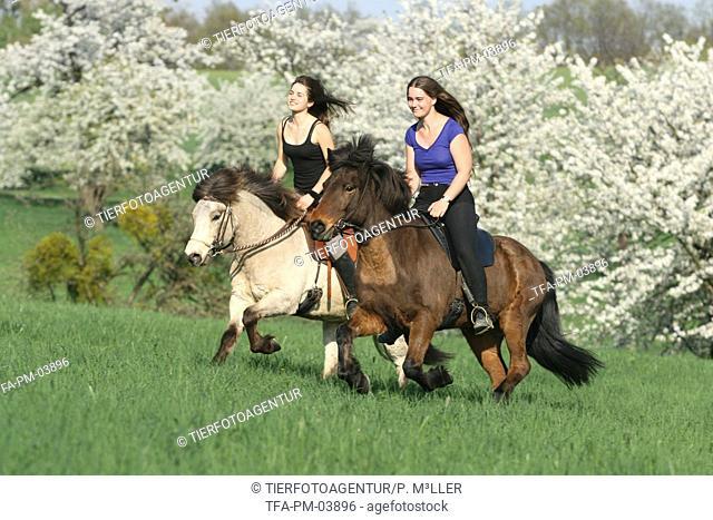 riding Icelandic Horses