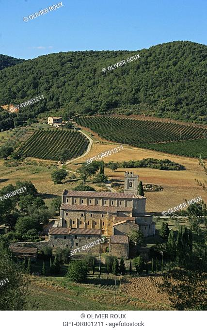 VINEYARDS IN THE AREA AROUND MONTALCINO, SAN'ANTIMO ABBEY, TUSCANY, PROVINCE OF SIENNA, ITALY