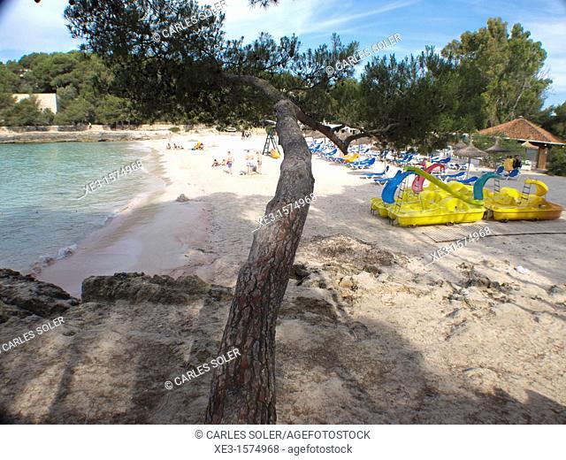 A pine above the beach, Majorca, Spain