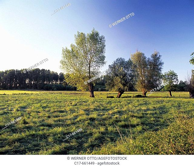 Germany, Viersen, Niers, Lower Rhine, North Rhine-Westphalia, Lower Rhine landscape, agrarian country, meadow, pasture, willow trees in the background
