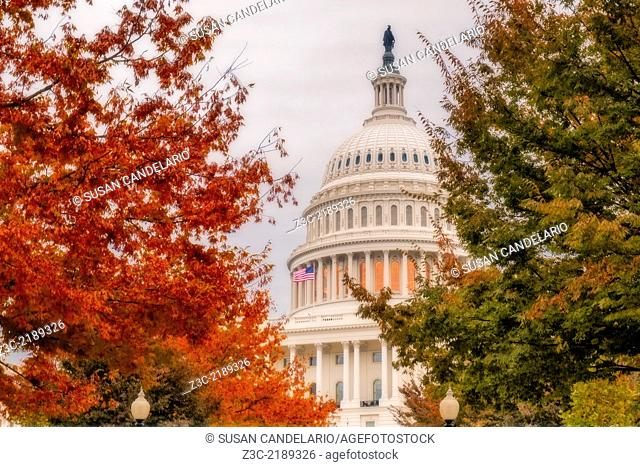 The Nations Capitol dome surronded with the beautiful colors of the fall foliage