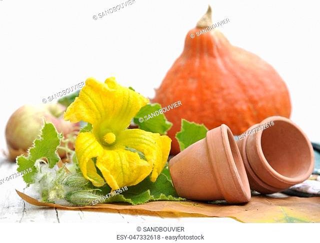 yellow flowers, terra cotta pots and pumpkin on garden table