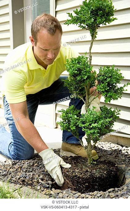 Man planting bush outside house