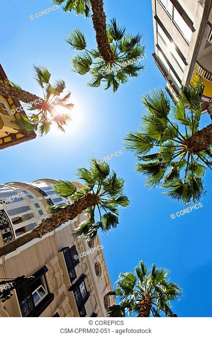 The scorching hot sun beating down on palm trees and a lush holiday resort at noon