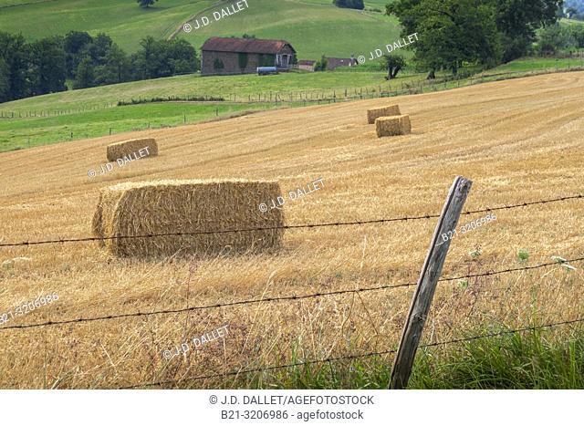 France, Auvergne, Cantal, after harvest at Saint Constant