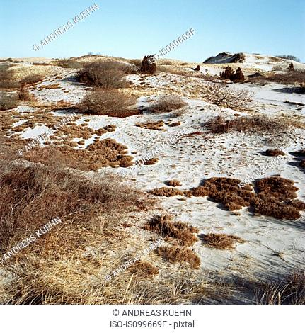 Sand dunes, Sandy Neck, Cape Cod, USA