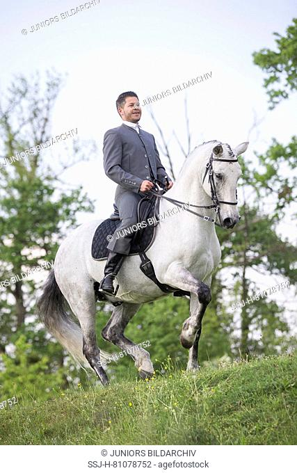Pure Spanish Horse, Andalusian. Blind gelding performing a piaffe with its rider and owner Sandro Huerzeler. Switzerland