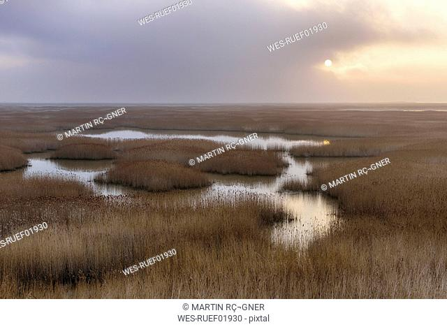 France, Le Havre, Seine River marsh with reed grass at sunrise