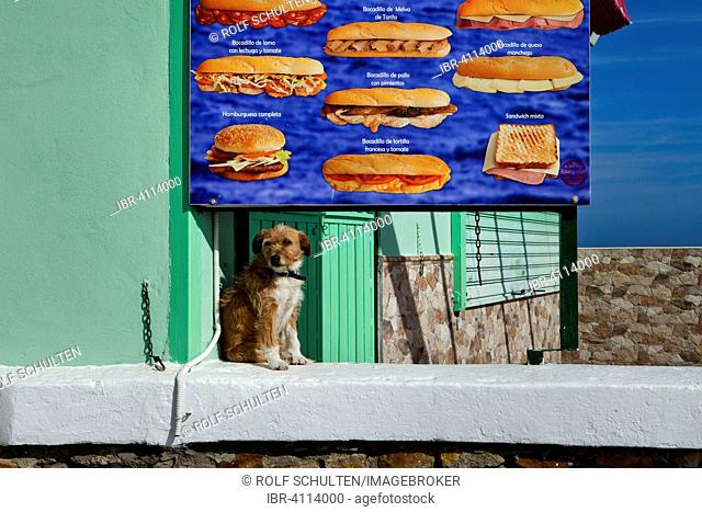 A dog sitting in front of a poster showing snacks, Algeciras, Andalusia, Spain