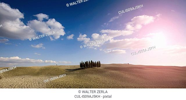 Distant view of cypress trees, Siena, Valle D'Orcia, Tuscany, Italy