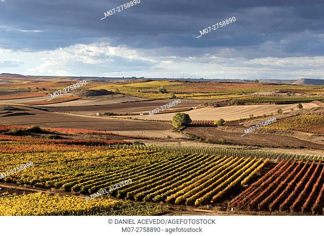Cordovin vine scape, La Rioja wine region, Spain, Europe
