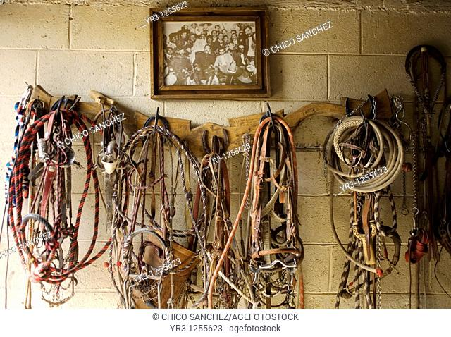 Horse reins hang below a photo of Mexico's Revolutionary Heros Francisco 'Pancho' Villa and Emiliano Zapata in a stable in Tepotzotlan, Mexico