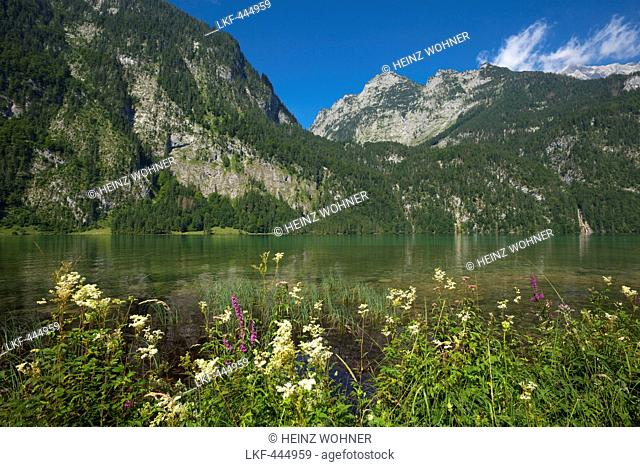 Near Salet at the southern part of Koenigssee, Berchtesgaden region, Berchtesgaden National Park, Upper Bavaria, Germany