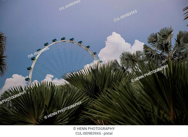 View over palm leaves from the Gardens by the bay to the Ferris wheel, Singapore