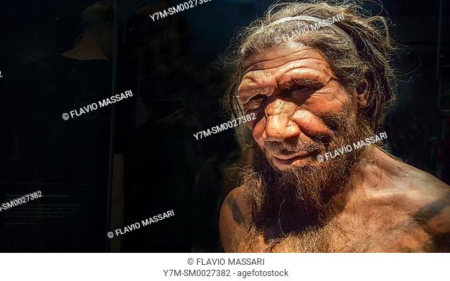 Human evolution gallery . Model of male Homo neanderthalensis, Natural History Museum, London, England, UK, This image could have imperfections as itâ