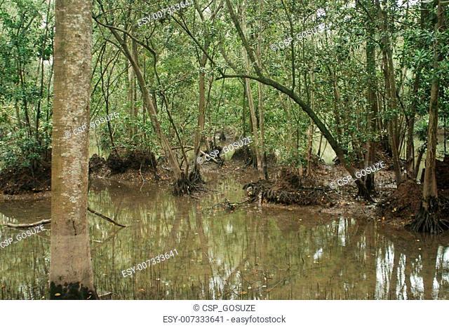 Wetlands in Singapore
