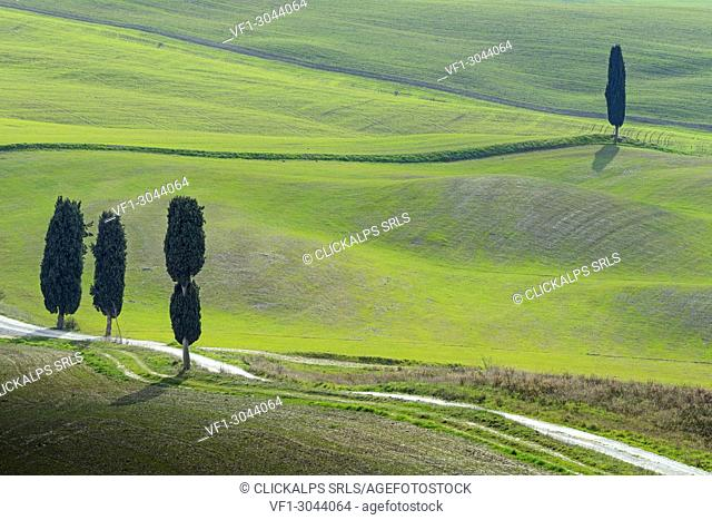 Green hills in Orcia valley