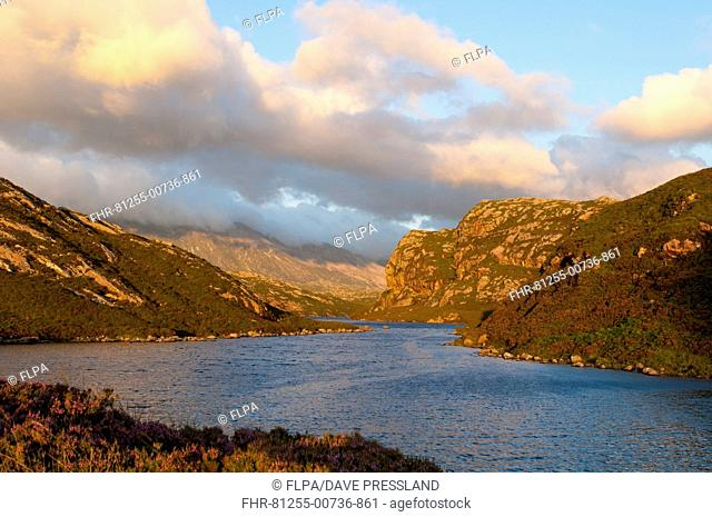 View of freshwater lake in evening sunlight, Loch na Thull, Rhiconich, Sutherland, Highlands, Scotland, August