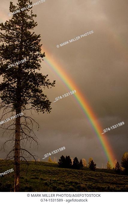 Rainbow Yellowstone National Park USA