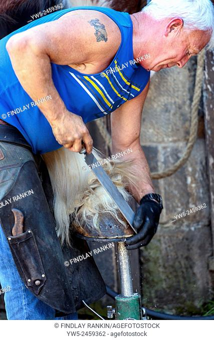 Farrier filing down the hoof of a Clydesdale horse when fitting a horseshoe, Pollok Park, Glasgow, Scotland, UK