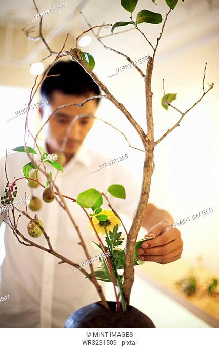 Japanese man in a flower gallery, working on Ikebana arrangement