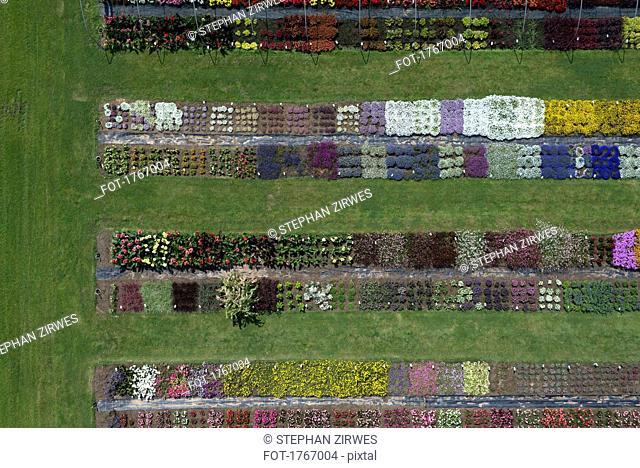 Aerial view experimental flower crops, Hohenheim, Baden-Wuerttemberg, Germany