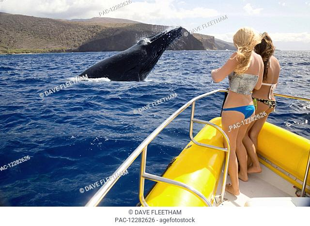 Two girls on a whale watching boat out of Lahaina, Maui, get a close up look at a breaching humpback whale (Megaptera novaeangliae) off the island of Lanai;...