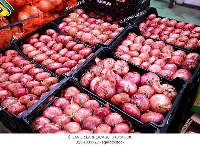 Onions, Mercabilbao fruits and vegetables wholesale market, Basauri, Bilbao, Bizkaia, Euskadi, Spain