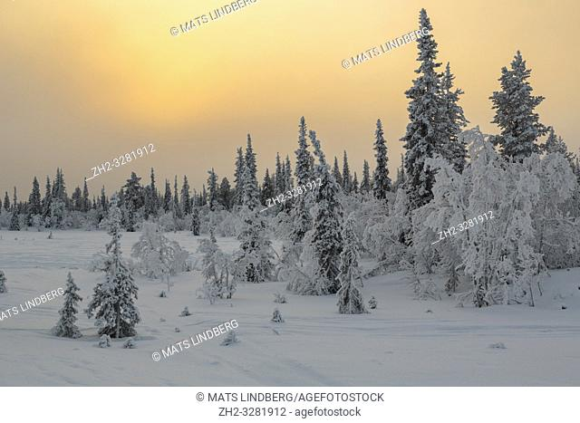 Landscape in winter season, sun behind clouds making the sky orange, nice colorful sky, Gällivare county, Swedish Lapland, Sweden