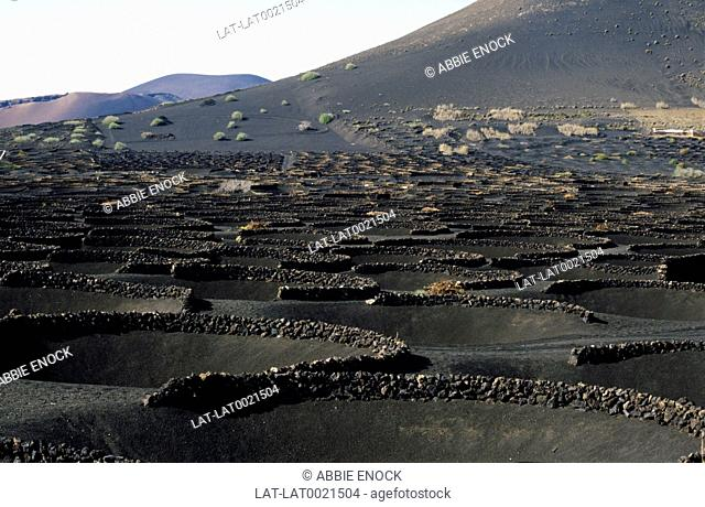 Depressions dug in volcanic granules where the ground is fertile and retains warmth from the sun to aid growth. Fruit and vines grown in bunkers