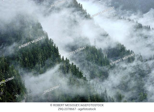 A scenic landscape image of conifer trees growing on the sides of the steep coastal mountains of British Columbia near the town of Stewart on a wet misty...