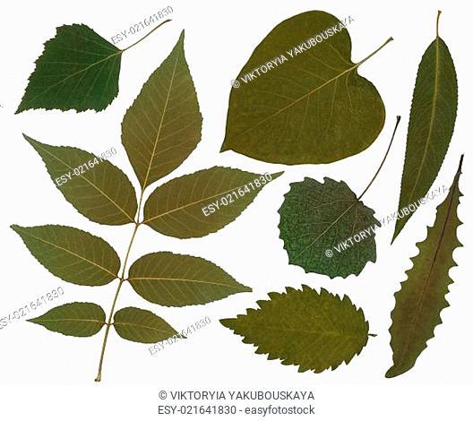 Tree leafs set