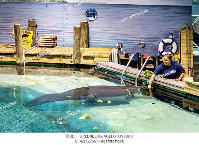 Florida, Gulf Coast, Bradenton, South Florida Museum, Parker Manatee Aquarium, natural history, marine environment, exhibition, pool, rehabilitation
