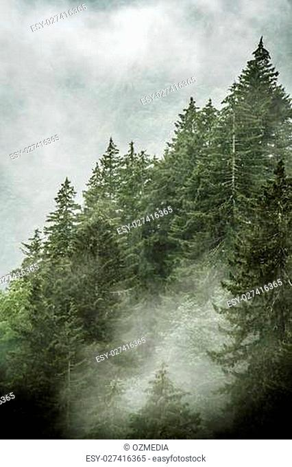 Beautiful green forest, mist, mountain scene from Sumela Monastry at Trabzon, Turkey