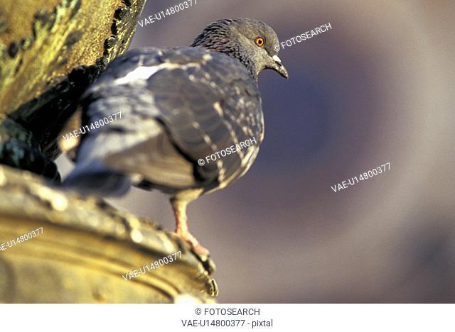 animals, day, bird, aves, aichner