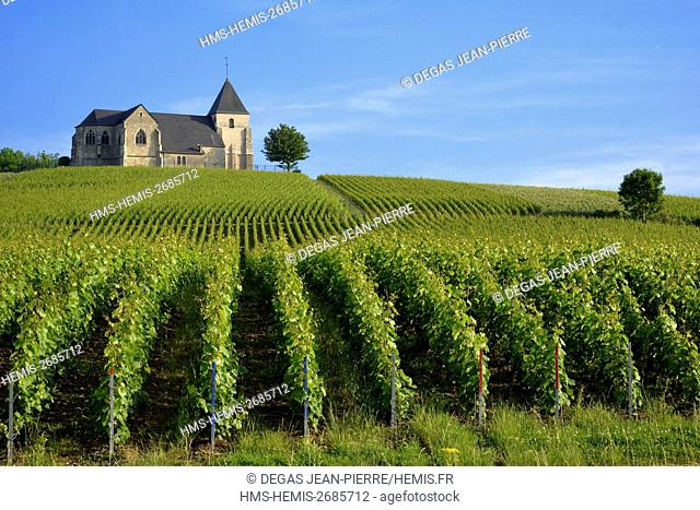 France, Marne, Chavot Courcourt, Saint Martin Chavot church of the 12th century in the middle of the vineyard of champagne