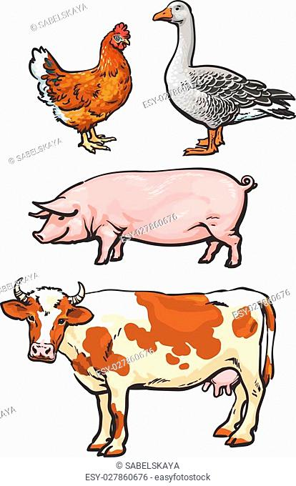 Farm animals, cow, pig, chicken, goose, poultry, livestock, color vector illustration, sketch style with a set of animals isolated on white background