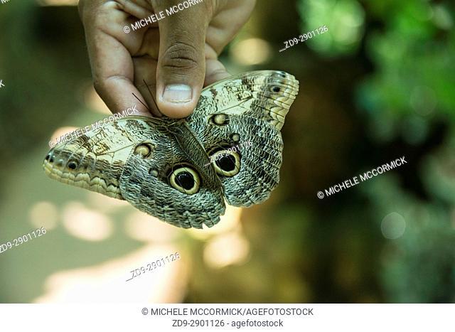 Gumbalina Park in Honduras has a wonderful butterfly preserve
